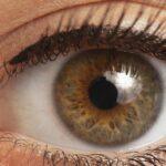 La membrana dell'occhio